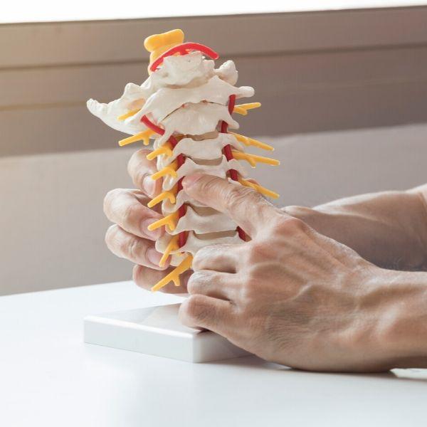 spine neck